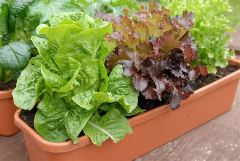 11 Inspiring Pictures To Start Vegetable Gardening In Pots Vegetable Gardening In Pots