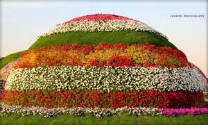 flower garden word mountain of flowers googsy photography