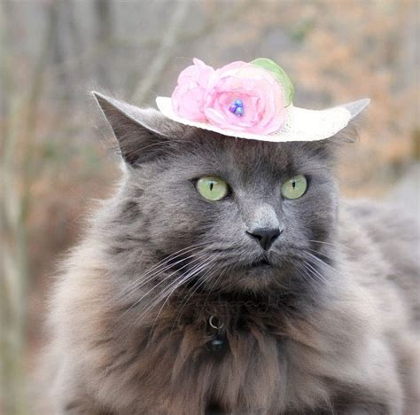 Cat Hats by Cat Hats Www Imgkid The Image Kid Has It