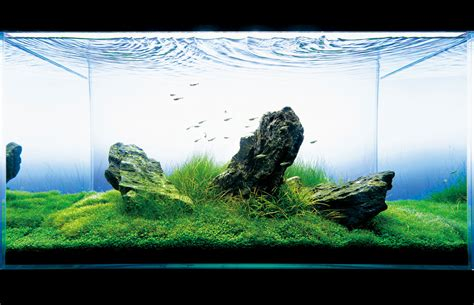 ada aquascaping seahorse aquariums now suppling ada in ireland