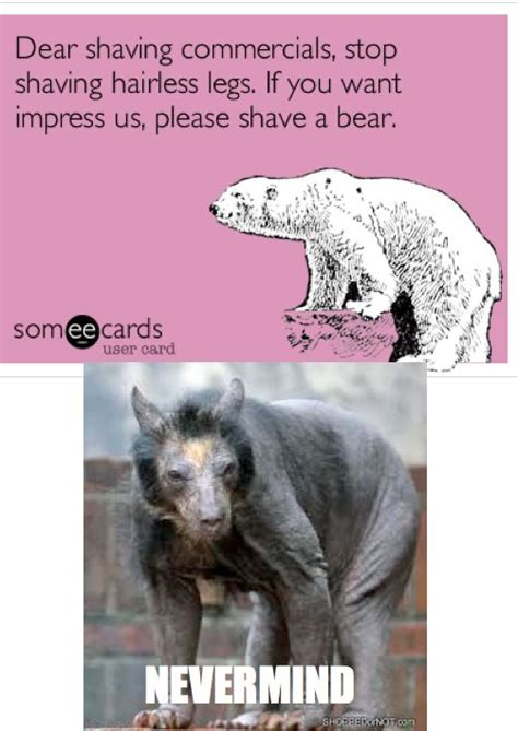Shaved Bear Meme - best 25 shaved bear ideas on pinterest which animals