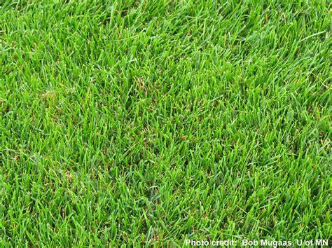 types of garden grass sulis sustainable landscape information series