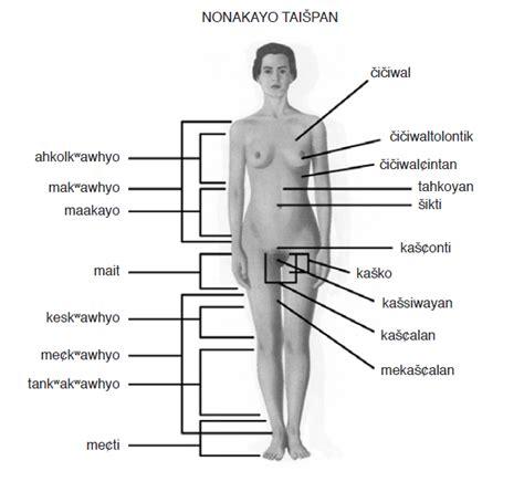 imagenes y nombres de las partes del cuerpo partes del cuerpo nombres todas imagui