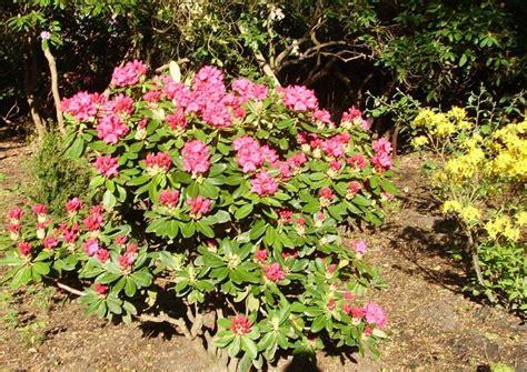 Terrassengestaltung Mit Pflanzen 3267 by Rhododendronpark Graal M 252 Ritz In Mecklenburg Vorpommern