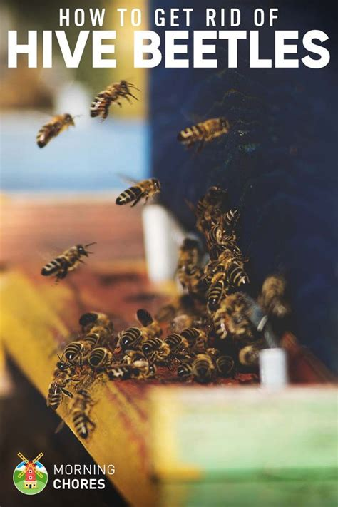 how to get rid of bees in backyard 63 best images about bees on pinterest honey bees solar and bee hives