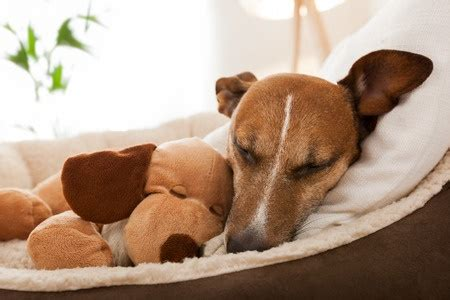 why do dogs hump their bed our pet gifts guide for christmas argos pet insurance