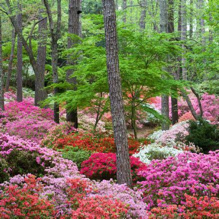 Callaway Gardens by Gardens In Visit Callaway Resort Gardens