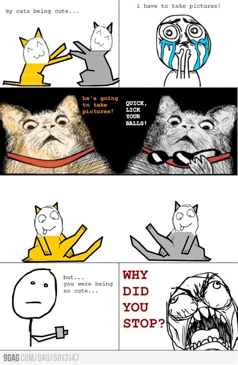 Funniest Meme Comics - taking picture of cats funny meme funny memes and pics