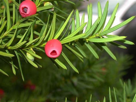 Giftige Planten by Giftige Planten Verzorging Rajeza Jouwweb Nl