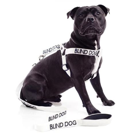 blind dogs blind harness and leash set park publishing