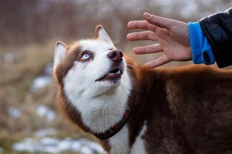 perros con personas 191 qu 233 hacer si mi perro tiene miedo a las personas