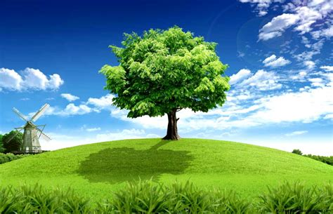 wallpaper green tree hd green tree hd wallpaper 1080p full free hd wallpapers