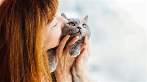 how to register your as an emotional support animal emotional support cat does yours qualify
