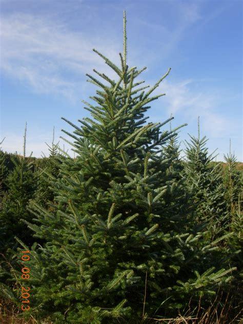 christmas tree species wisconsin tree guy