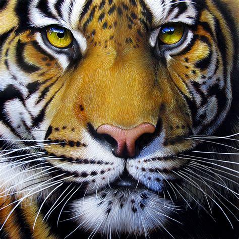 Painting Tiger tiger by jurek zamoyski