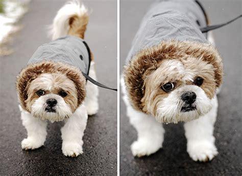 shih tzu coats jackets review canada fouse coat by foufou milk