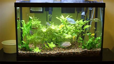 best substrate for aquascaping – Aquascaping   Best planted aquariums of PetFair 2011, part