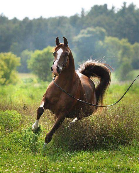 imagenes artisticas de caballos fotos de caballos iv el mundo del caballo caballos