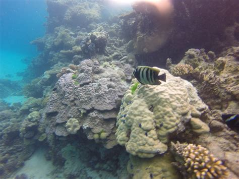 great barrier reef dive diving the great barrier reef taravels