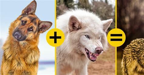 imagenes epicas de animales 11 h 237 bridos de animales que no sospechabas que exist 237 an