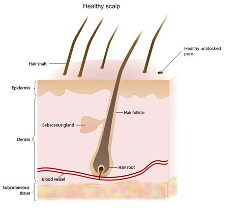 Hair Follicle Detox Shoo by Clogged Hair Pores Scalp The Best Hair Of 2018