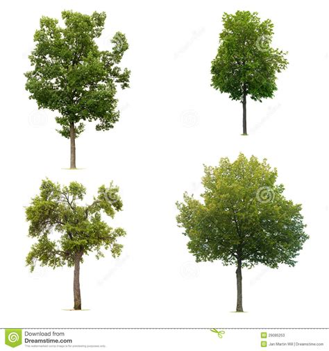 tree pic set of leafy green tree stock image image of leafy
