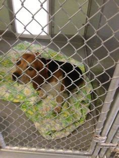 broome county shelter endicott 7 13 reunited 7 14 quot has been found after a evening knocking