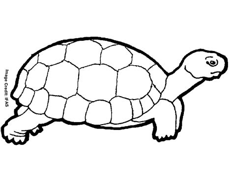 Free Printable Animal Quot Turtle Quot Coloring Pages Turtle Coloring Page