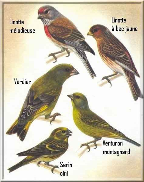 types of birds general information