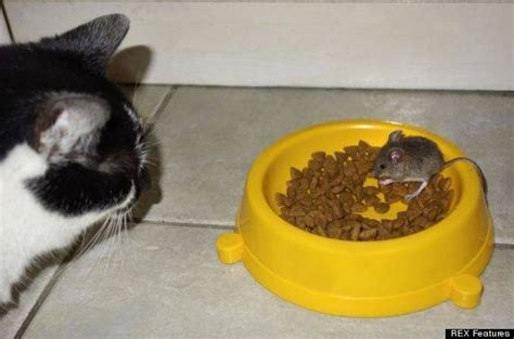 alimentazione gatti sterilizzati croccantini gatti cibo gatti