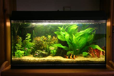 Aquascaping Supplies Amazing Fish Tanks Choosing The Right Fish Tank For You