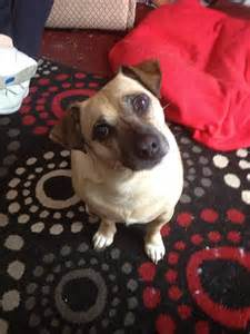 Small Dogs Needing A Home Small Needs Forever Home Wolverhton West