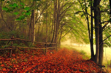 las mas maravillosas imagenes bonitas de paisajes free image bank las im 225 genes m 225 s hermosas del mundo 2011