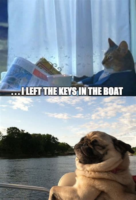 dog on boat quotes living the pug life the meta picture