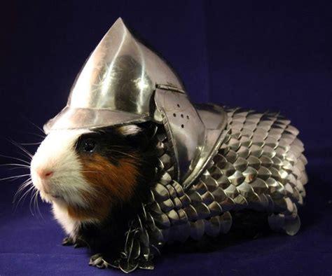 Handmade Pig - handmade guinea pig armor dudeiwantthat