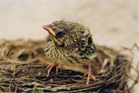 nature vs nurture how do baby birds learn how to fly