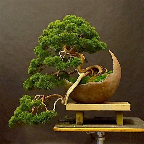 vasi bonsai giapponesi bonsai related keywords suggestions bonsai