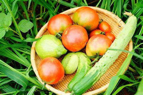 alimenti ipocalorici sazianti cibi ipocalorici alimenti che saziano verdure per