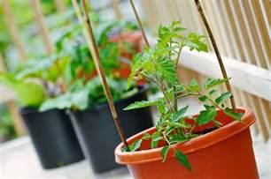 vegetable container gardening basics