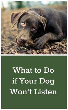 goldendoodle puppy wont stop biting 197 best images about shih tzu behavior on