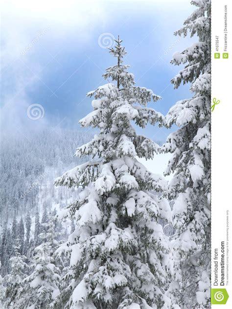 paisaje nevado en el tiempo de la navidad 225 rboles con