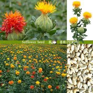 safflower seed carthamus tinctorius seed 150g