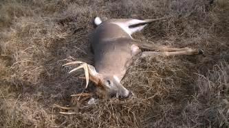 buck buck big 8 point sw buck
