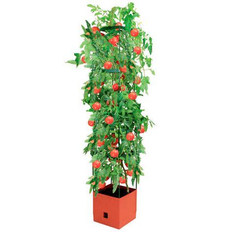 Tomaten Pflanzen Kaufen 127 by Tomaten Tower Inkl Rankhilfe Eckig Kaufen Bei