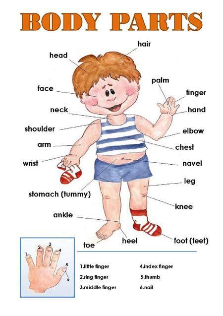 imagenes en ingles de las partes del cuerpo las partes del cuerpo en ingl 201 s consejos para padres y