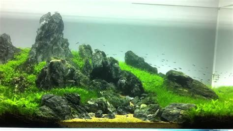 Aquascape Freshwater Aquarium Iwagumi Piotr Dymowski Layout Youtube