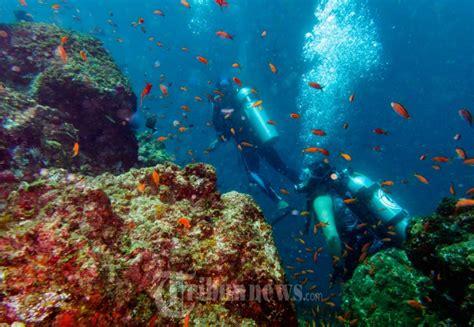 Bibit Terumbu Karang keindahan terumbu karang bawah laut pulau sabang foto 1