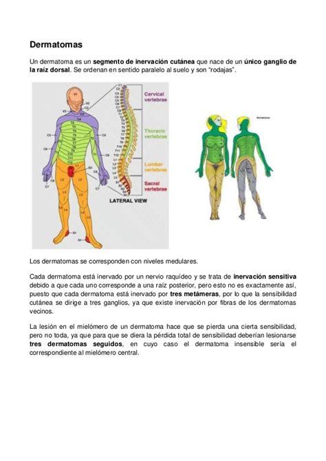 imagenes neuroanatomia pdf neuroanatomia 130830192911 phpapp02