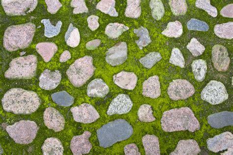 Se Débarrasser De La Mousse Sur Une Terrasse 2192 by Comment Bien Prot 233 Ger Votre Terrasse En Des Mousses