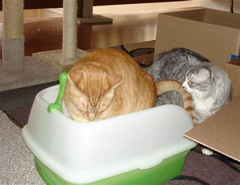 cat pooping in bathtub why does my cat poop in the bathtub 28 images the pet